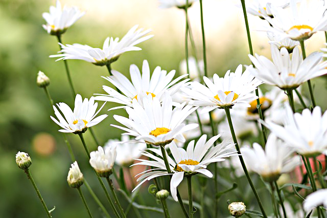 flowers-1606041_640