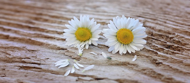 flowers-747345_640