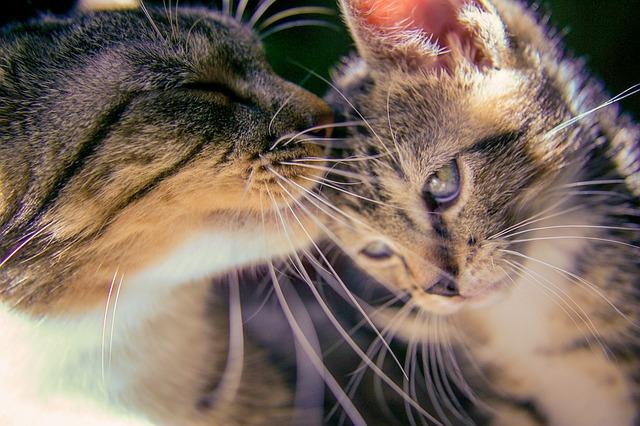 kitten-488667_640