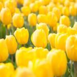 spring-2115530_640