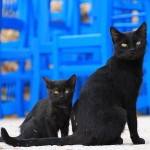 cat-1165112_640