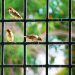 sparrow-806176_640
