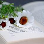 book-2436058_640