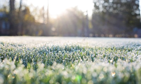 frost-on-grass-1358928_640